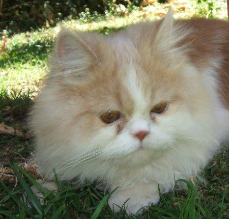 orejas de gato. pictures Orejas de gato y