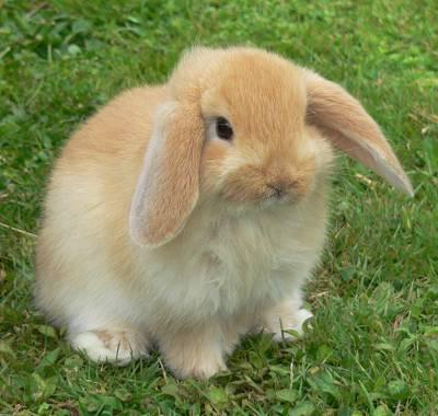 Rabbietts Mascotas-conejos